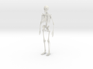 Skeleton in White Strong & Flexible