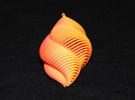 Mathematical Mollusca - Small Yellow/Red Shell Orn in Full Color Sandstone