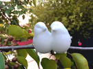 #BFF - Birdly feathered Friends in White Strong & Flexible