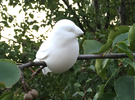 Bird - looking left in White Strong & Flexible
