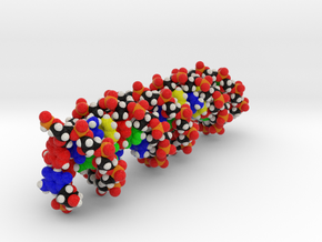 "Custom DNA Molecule model ""MESNEESE"" Large in Full Color Sandstone"