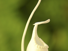 Pitcher Plant Villosa in White Strong & Flexible Polished