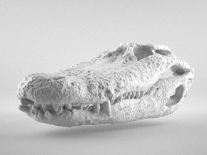 Alligator Skull - large in White Strong & Flexible
