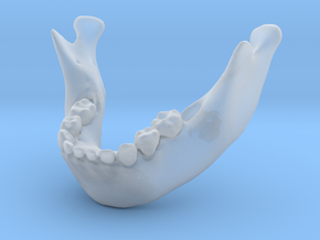 Subject 6b | Mandible + Teeth in Frosted Ultra Detail