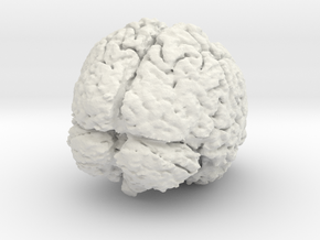 Complete Brain in White Strong & Flexible