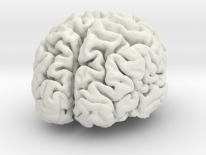 Brain replica full scale from MRI scan in White Strong & Flexible