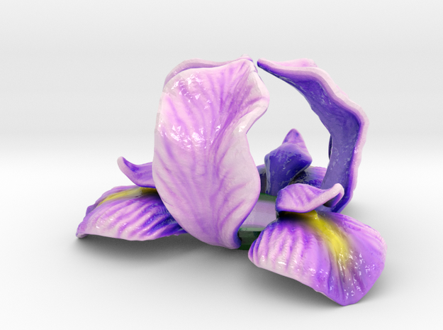 Iris Candle Holder (Color) 3d printed
