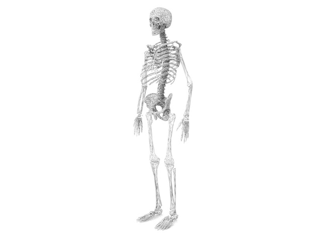 Life Size Poly Legs and Feet - Skeleton 3d printed 6ft. Full Skeleton in White - All parts available in store