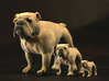 Bulldog S Full Color Sandstone 3d printed XXL,L,S size