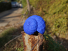 Snail Shell 3d printed Snail Shell - in Blue Strong and Flexible #2