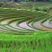 ricefields2018aa