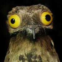 leehancock
