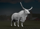 Ankole-Watusi 1:64 Standing Male in Frosted Ultra Detail