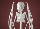 Vampire Bat Skeleton  in White Strong & Flexible