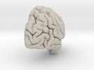 Right Brain Hemisphere 1/1 in Sandstone