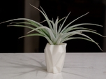 Ruba Rombic Vase for Air Plants