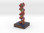 BENCHWORKS DNA