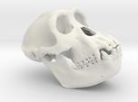 Chimpanzee skull 52mm