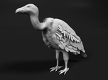 White-Backed Vulture 1:48 Standing 3