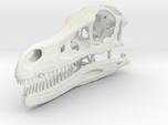 Velociraptor - dinosaur skull replica