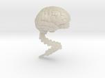 Brain, Large