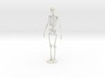 Skeleton new