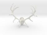 Red Deer Antler Mount - 50mm