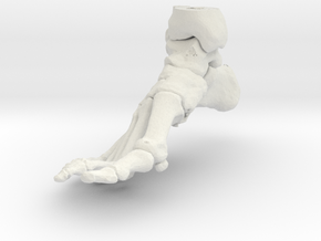 Foot and Ankle (SKU 015) in White Natural Versatile Plastic