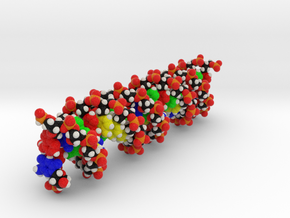 "Custom DNA Molecule Model ""Magdalena"" Size Large in Full Color Sandstone"