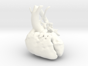Paediatric Heart in White Processed Versatile Plastic