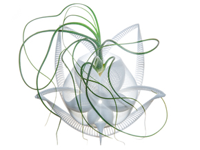 Bulbophyllum Gracilis Planter in White Natural Versatile Plastic