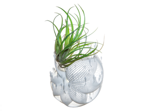 Bulbophyllum Plurispora Planter in White Strong & Flexible