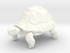 Tortoise in White Processed Versatile Plastic