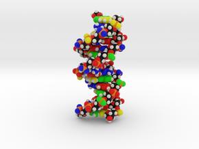 "DNA Molecule Model ""Emily"", Standard in Full Color Sandstone"