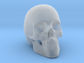 Human Skull in Smooth Fine Detail Plastic