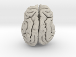 Leopard brain in Natural Sandstone