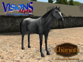 Horse Grey in Full Color Sandstone