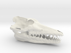 Pakicetus skull half size in White Strong & Flexible