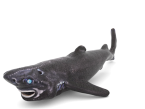 Ninja LanternShark in Full Color Sandstone