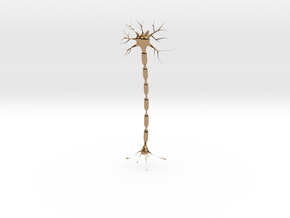 Neuron Pendant. in Polished Brass