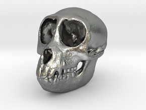 SPIDER MONKEY SKULL - ACTUAL SIZE in Natural Silver