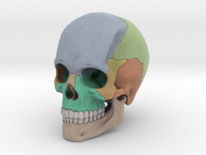 Artist Sculpted Skull For Reference in Full Color Sandstone