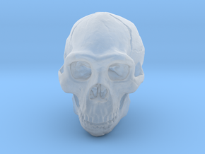 Real Skull : Homo erectus (Scale 1/1) in Smooth Fine Detail Plastic