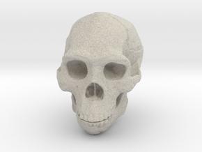 Real Skull : Homo erectus (Scale 1/2) in Natural Sandstone