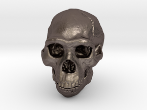 Real Skull : Homo erectus (Scale 1/4) in Polished Bronzed Silver Steel