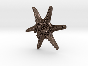 Horned Sea Star in Polished Bronze Steel