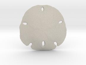 Sand Dollar in Natural Sandstone