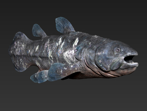 Coelacanth (Small/Medium size) in White Strong & Flexible: Small