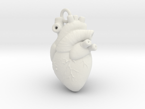 Anatomical human heart in White Natural Versatile Plastic