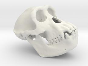 Chimpanzee skull 52mm in White Natural Versatile Plastic